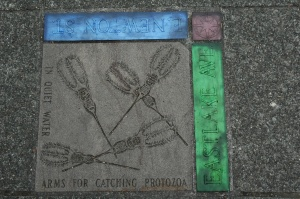 Science on the sidewalk
