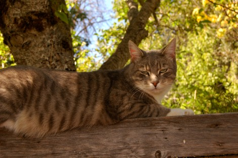 Spanky on his favorite spot under the walnut tree