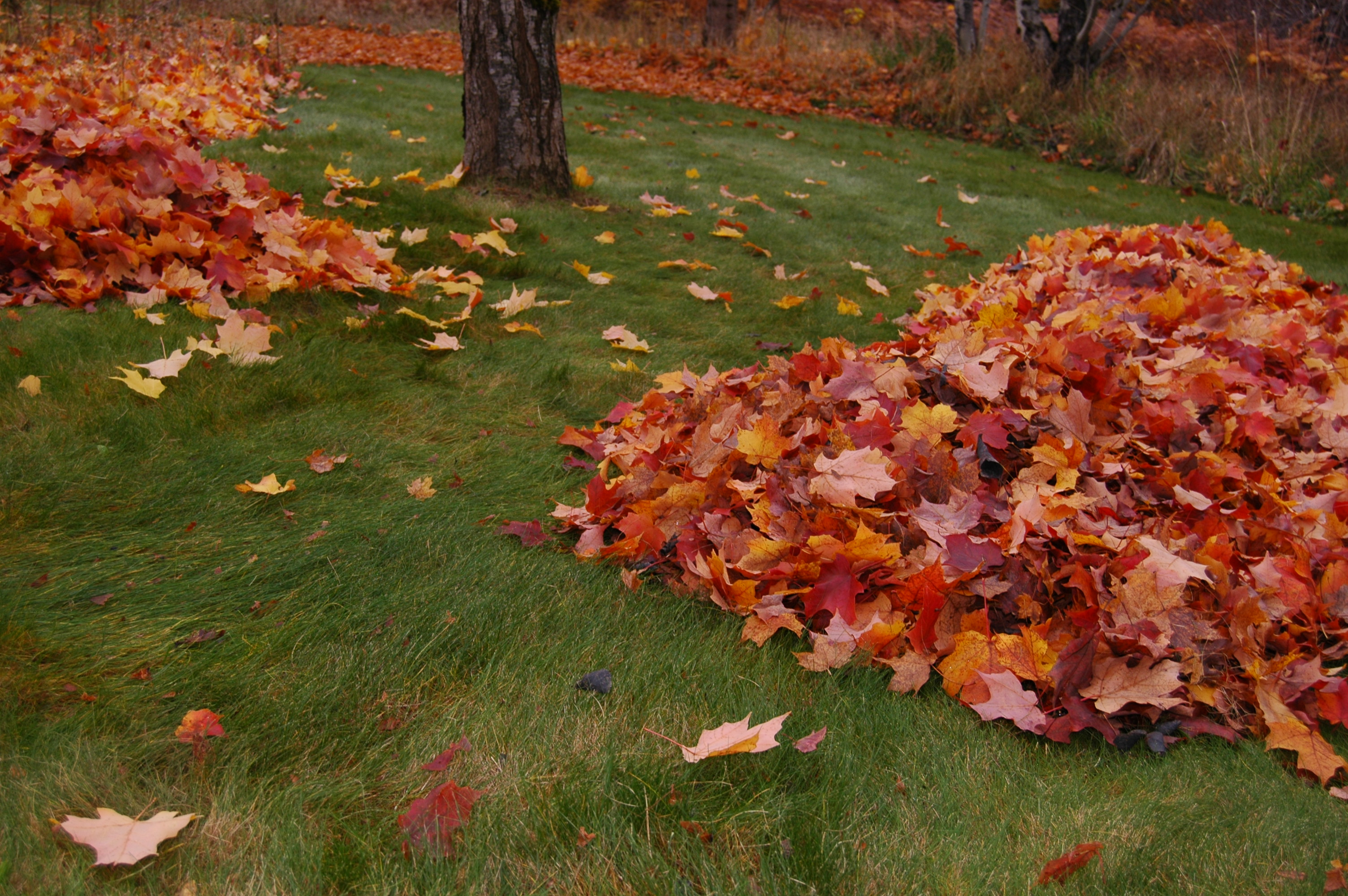 Piles of beautiful autumn red and orange leaves, via Good Blood Bad Blood