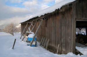 A dilapidated barn laden with snow.