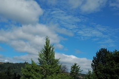 Green trees, blue sky, and mother of pearl clouds