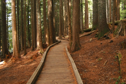 A boardwalk section of the Lost Lake loop trail.