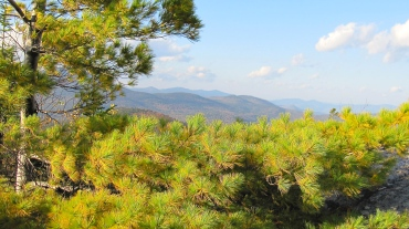 Pine Tree and Clouds Atop Black Cap Mountain