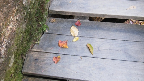 Leaf Litter on the Flume Trail