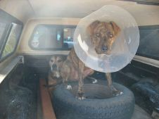 Bruce, My Son's Dog, with a Satellite Dish Provided by Dr. K.