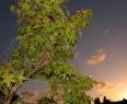 Summer Sky at Dawn