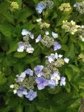Coastal Flowers