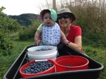 Picking Blueberries with our Granddaughter in Parkdale