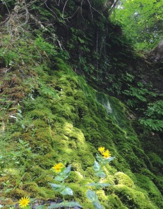 A cliff feature of water, sun, moss, and flowers.