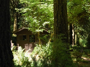 Our little cabin in the old growth section above the Conference Center.