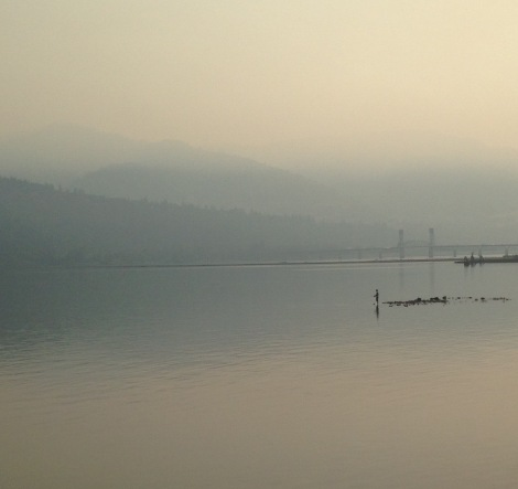 Solitary fly fisherman