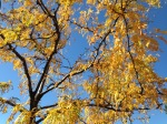 Autumn Leaves and a Blue Sky