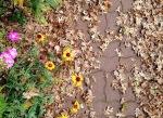 Autumn Verses
