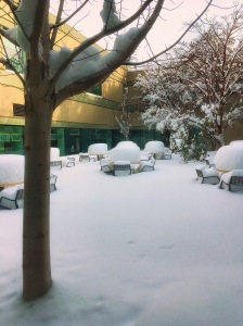 Courtyard of the hospital cafeteria.