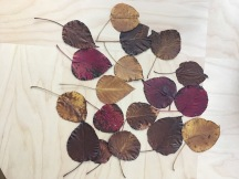 A collection of leaves found on the street last year.