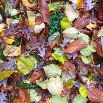 Leaf drop.